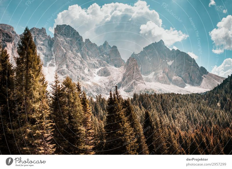 Dolomites with trees in foreground I Adventure Hiking Beautiful weather Bad weather Fog Peak Summer Landscape Nature Environment Far-off places Freedom Mountain