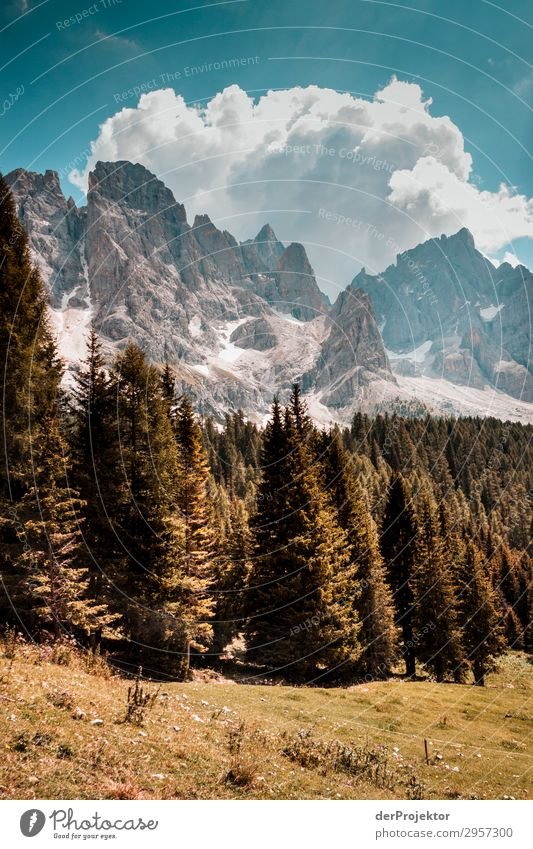 Dolomites with trees in foreground II Adventure Hiking Beautiful weather Bad weather Fog Peak Summer Landscape Nature Environment Far-off places Freedom
