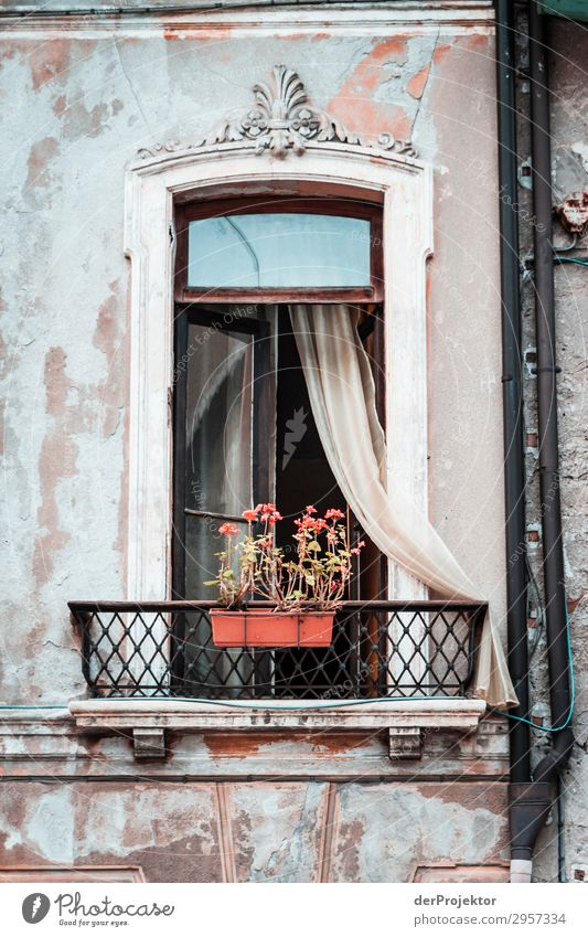 Window with flower box in Feltre Central perspective Deep depth of field Vacation photo Italy Tourist Attraction Authentic Hip & trendy Dream house Modest
