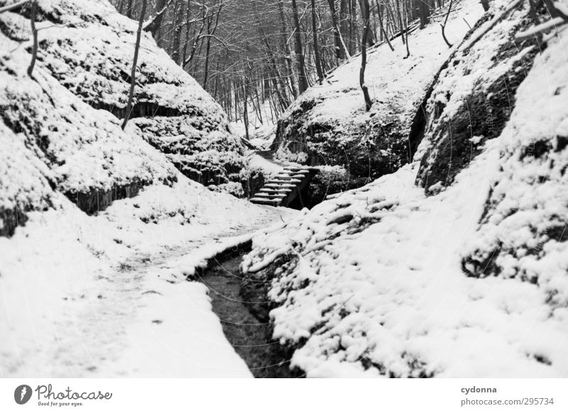 Stairs in the forest Relaxation Calm Trip Adventure Winter vacation Hiking Environment Nature Landscape Ice Frost Snow Tree Forest Rock Canyon Brook Loneliness