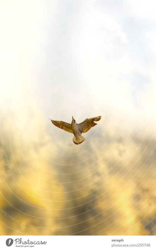 Sky Nature Heaven Clouds Animal Emotions Flying Bird Air Feather Wing Seagull Story Upward Dramatic Wilderness