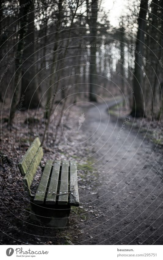 a long way away. Vacation & Travel Trip Hiking Nature Landscape Earth Autumn Winter Weather Plant Tree Moss Park Forest Deserted Park bench Bench Wood Line