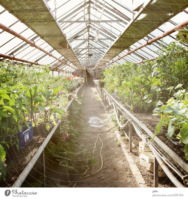 Nature Plant Building Natural Climate Agriculture Manmade structures Workplace Forestry Agricultural crop Foliage plant Greenhouse Pot plant Market garden