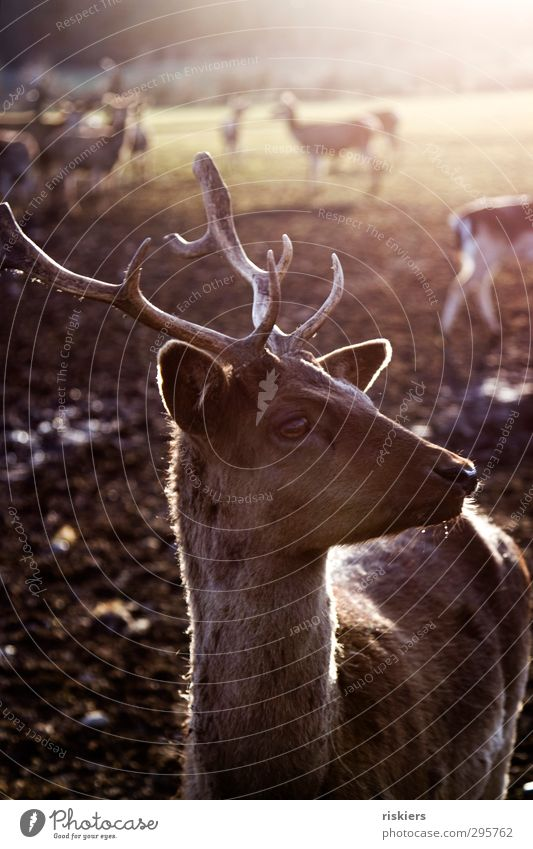 Nature Animal Calm Environment Meadow Autumn Spring Natural Brown Field Wait Beautiful weather Esthetic Group of animals Observe Safety