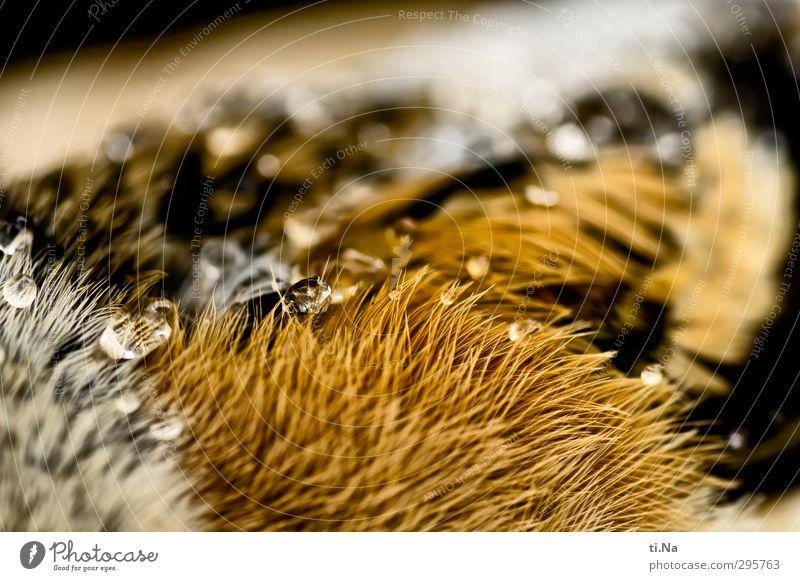mountain finch Wild animal Dead animal Bird Wing Lie Beautiful Brown Orange Black White Love of animals Grief Death Colour photo Macro (Extreme close-up)
