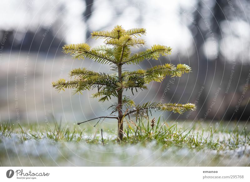 that's still growing Environment Nature Landscape Plant Water Winter Climate Weather Tree Grass Garden Meadow Field Freeze Stand To dry up Growth Thin Cold