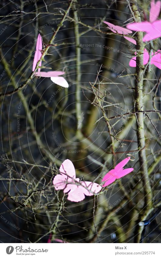 spring fever Spring Plant Tree Bushes Butterfly Wing Flock Flying Pink Branch Twigs and branches Decoration Judder Insect Butterflies in the stomach