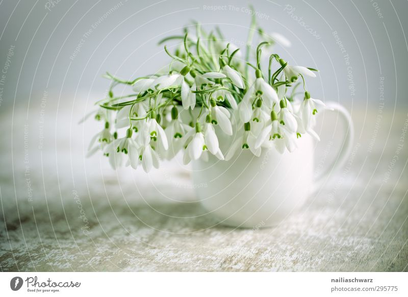 Green Beautiful White Plant Flower Love Life Gray Natural Dream Moody Fresh Happiness Table Cute Romance