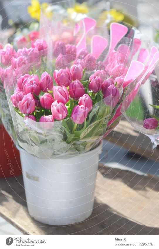 Flower Spring Blossom Pink Blossoming Bouquet Fragrance Tulip Valentine's Day Bucket Mother's Day Florist Flower vase