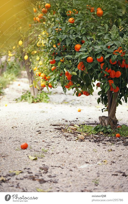 year-round. Art Esthetic Orange Orange juice Orange peel Orange tree Orange plantation Lemon Lemon juice Lemon tree Spain Colour photo Subdued colour