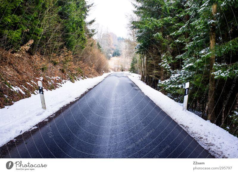 woidstraß Winter Snow Environment Nature Landscape Forest Traffic infrastructure Street Lanes & trails Dark Cold Above Blue Green Calm Loneliness Dangerous