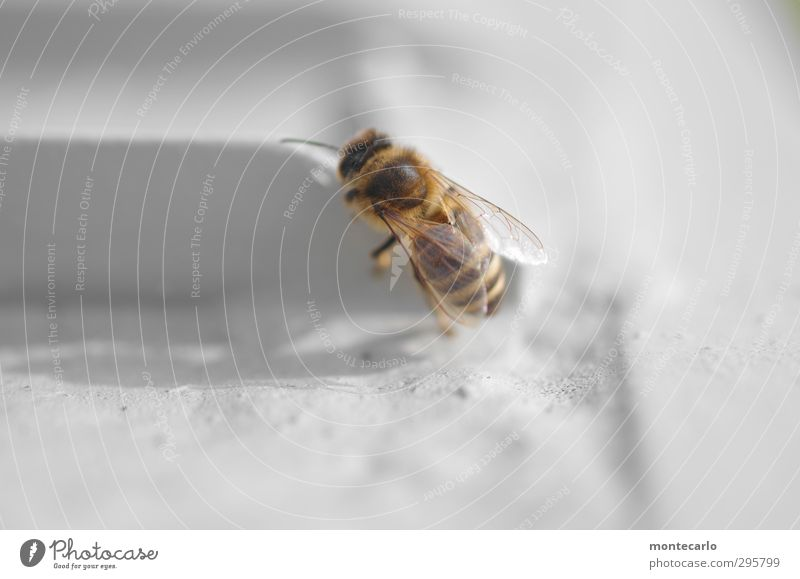 Nature Beautiful White Animal Small Metal Natural Brown Wild Wild animal Authentic Esthetic Thin Bee Thorny Farm animal