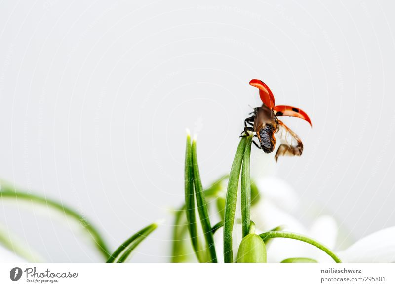 Take off! Environment Plant Animal Spring Flower Grass Wild animal Beetle Wing Insect Ladybird 1 Running Movement To hold on Flying Happiness Funny Cute
