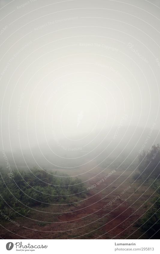 Sky Nature Vacation & Travel Loneliness Landscape Environment Dark Mountain Lanes & trails Horizon Travel photography Fog Transience Hill Mysterious Footpath