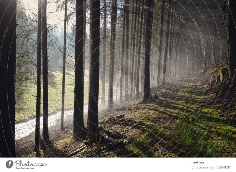 At the edge of the forest Nature Landscape Weather Fog Tree Grass Forest Hill Mountain River bank Brown Green Light (Natural Phenomenon) Colour photo