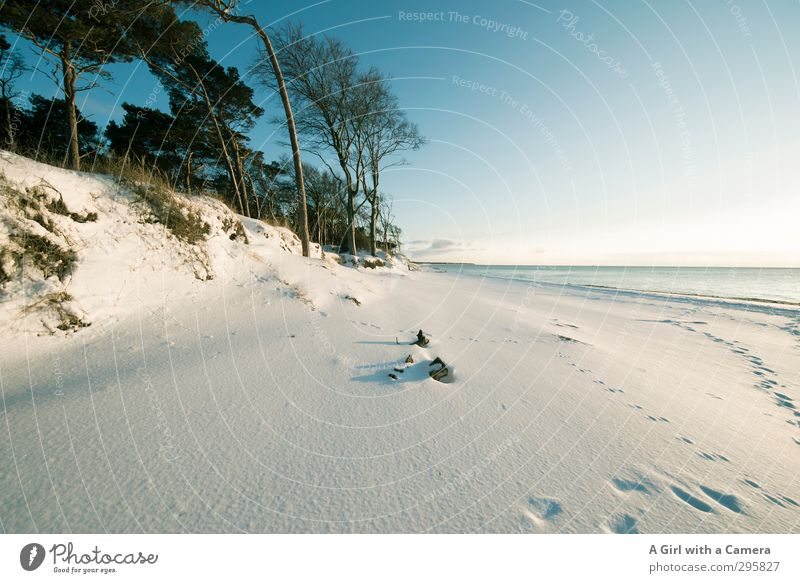almost the South Seas Environment Nature Landscape Plant Sky Cloudless sky Winter Weather Beautiful weather Snow Coast Baltic Sea Western Beach Darss Zingst