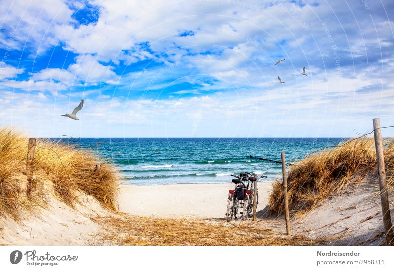 Experience the Baltic Sea by bike Lifestyle Vacation & Travel Tourism Trip Cycling tour Summer vacation Sun Beach Sand Water Clouds Beautiful weather Grass