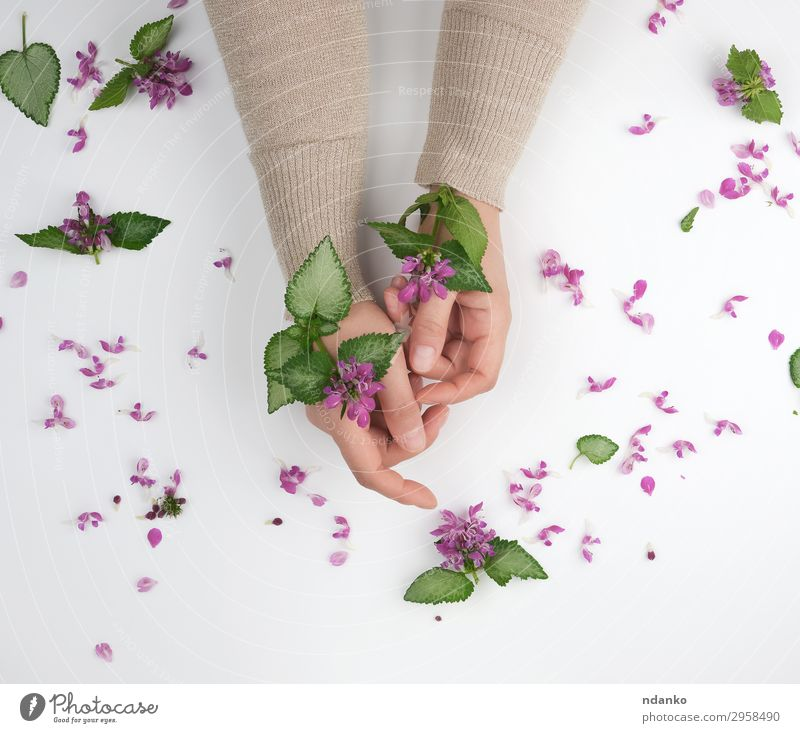 two hands of a young girl with smooth skin Woman Nature Summer Plant Beautiful Green White Hand Flower Leaf Adults Blossom Natural Fashion Pink Above