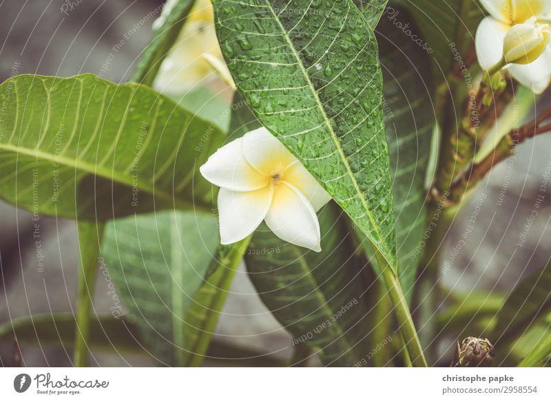 Plant Leaf Blossom Wet Exotic Foliage plant
