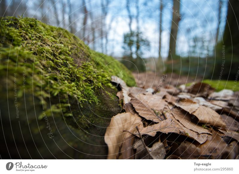 perspective Nature Autumn Moss Leaf Forest Woodground Sustainability Blue Brown Green Relaxation Freedom Contentment Colour photo Exterior shot Close-up