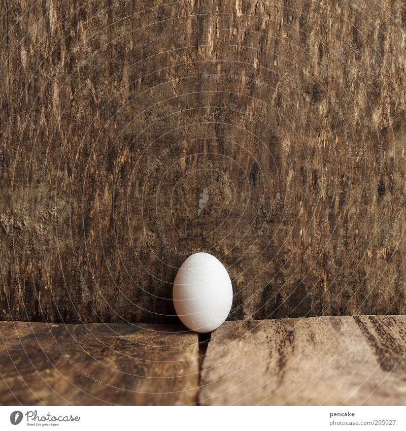 Youth photo | prenatal Food Nature Elements Farm animal Bird 1 Animal Wood Sign Beginning Discover Center point Growth Feminine Egg Hen's egg Chick Birth