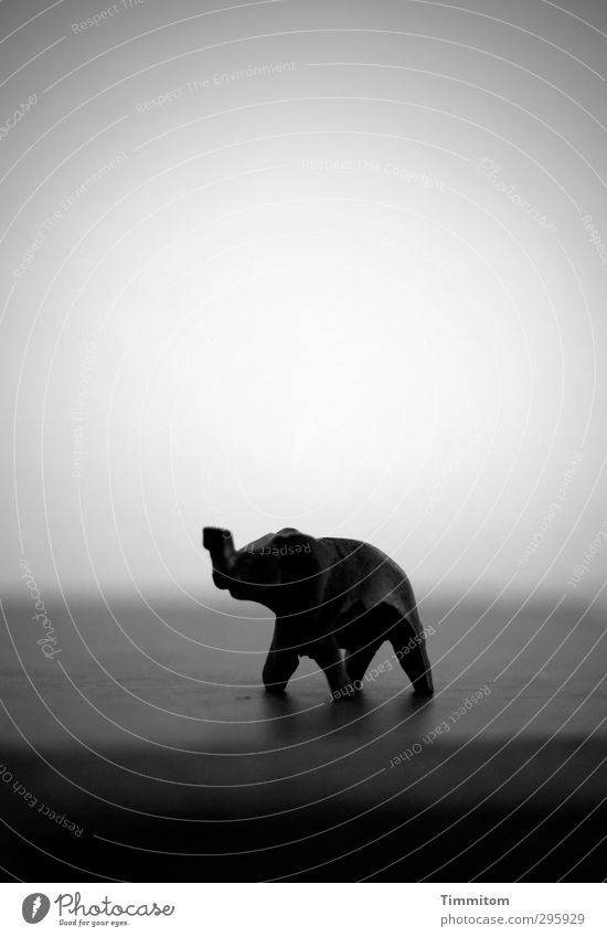 Youth photo. The world and everything. Elephant 1 Animal Wood Dream Simple Gray Black Emotions Adventure Wooden figure Miniature Black & white photo Pattern