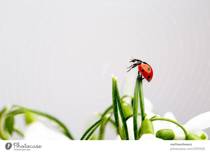 Plant Green Beautiful Flower Red Animal Funny Happiness Observe Simple Cute Adventure Touch Target Longing To hold on