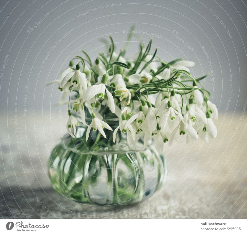snowdrops Plant Flower Blossom Snowdrop Tin Bouquet Vase Fragrance Faded Happiness Fresh Positive Beautiful Blue Gray Green Happy Spring fever Romance Idyll