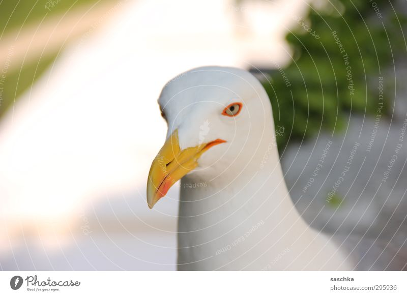 Vacation & Travel Animal Bird Wild animal Smiling Cool (slang) Break Animal face Watchfulness Seagull Portrait photograph