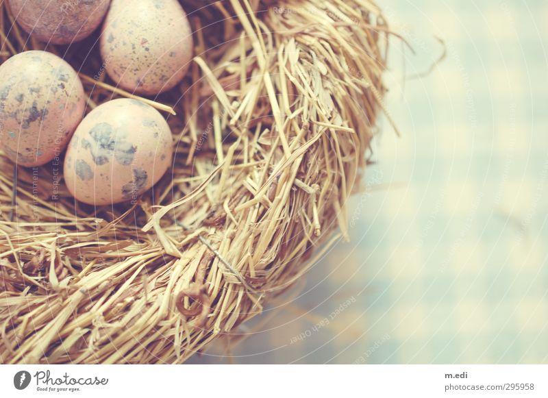 Nature Beautiful Animal Bright Bird Egg Nest Quail's egg