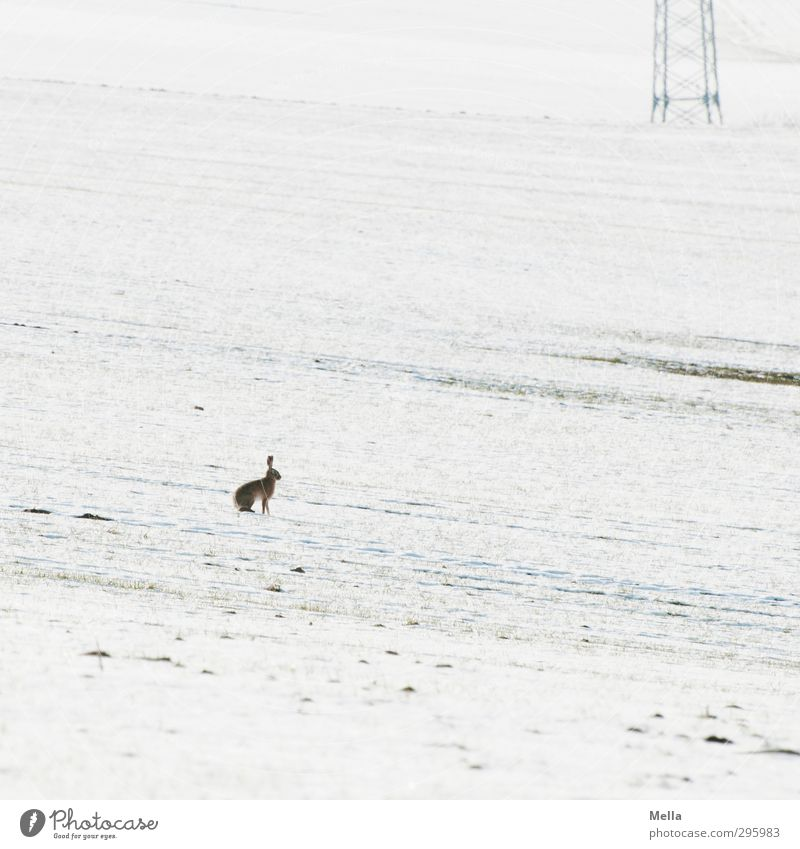 Was what? - Easter snowy Technology Energy industry Electricity pylon Environment Nature Landscape Animal Earth Spring Winter Climate Snow Field Wild animal