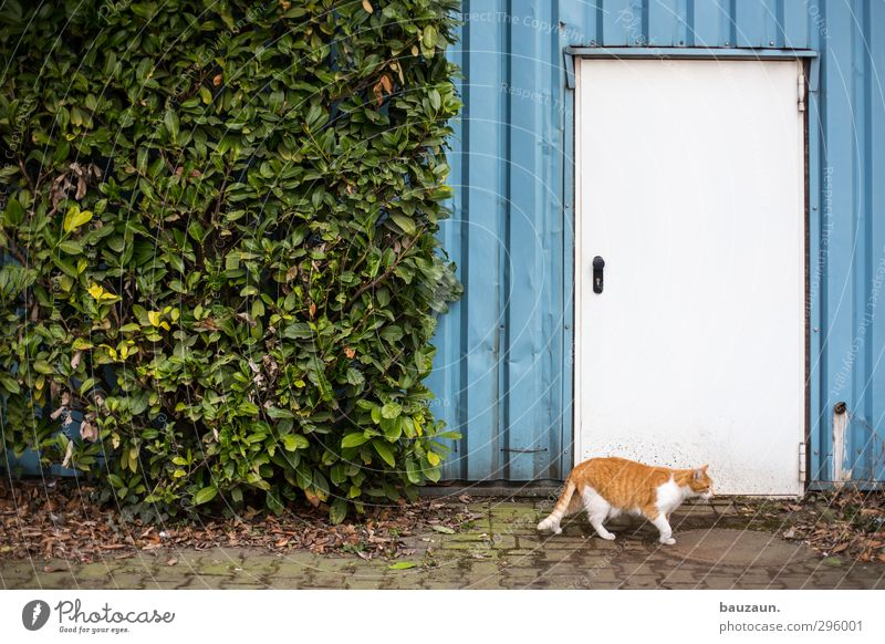 cat ante portas. Office Factory Agriculture Forestry Industry Plant Bushes Deserted Industrial plant Building Wall (barrier) Wall (building) Facade Door