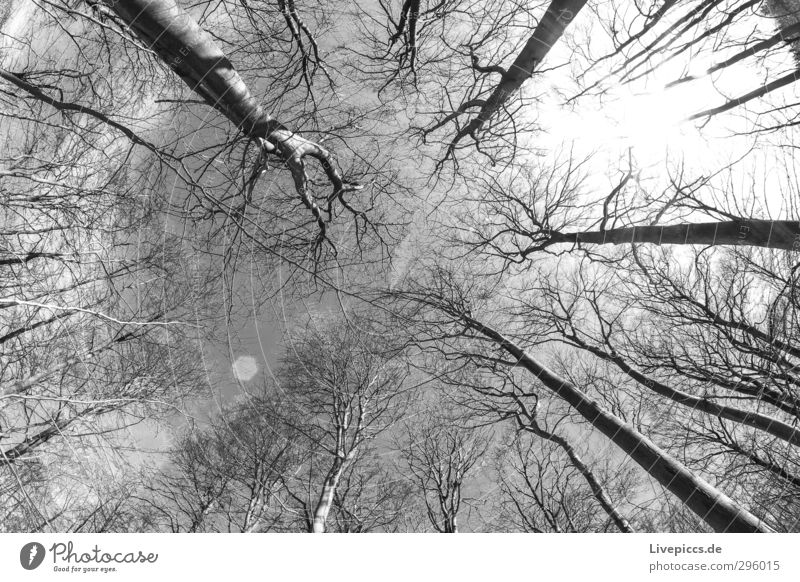 Time in the forest Environment Nature Landscape Plant Sky Clouds Sun Sunlight Winter Beautiful weather Tree Wild plant Forest Wood Black White