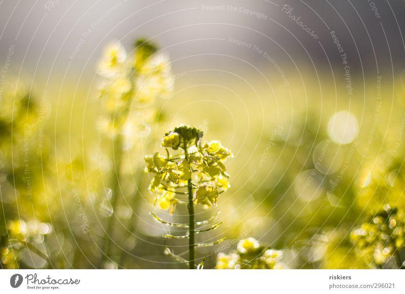 Nature Plant Sun Landscape Environment Yellow Autumn Spring Field Glittering Growth Illuminate Beautiful weather Fresh Idyll Happiness
