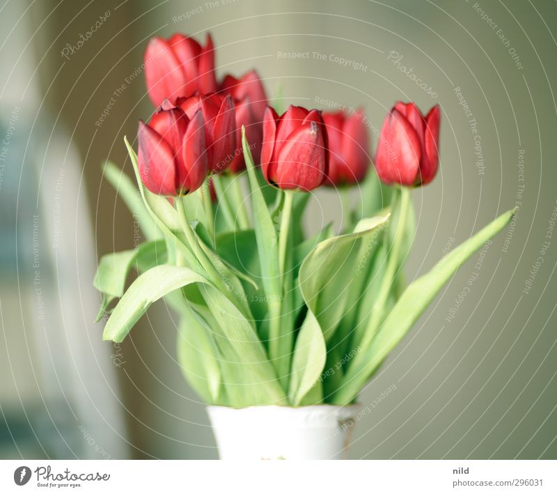 beginning of spring - red Environment Nature Plant Tulip Green Red Spring fever Flower Bouquet Blossom Vase Colour photo Interior shot Detail Morning Day