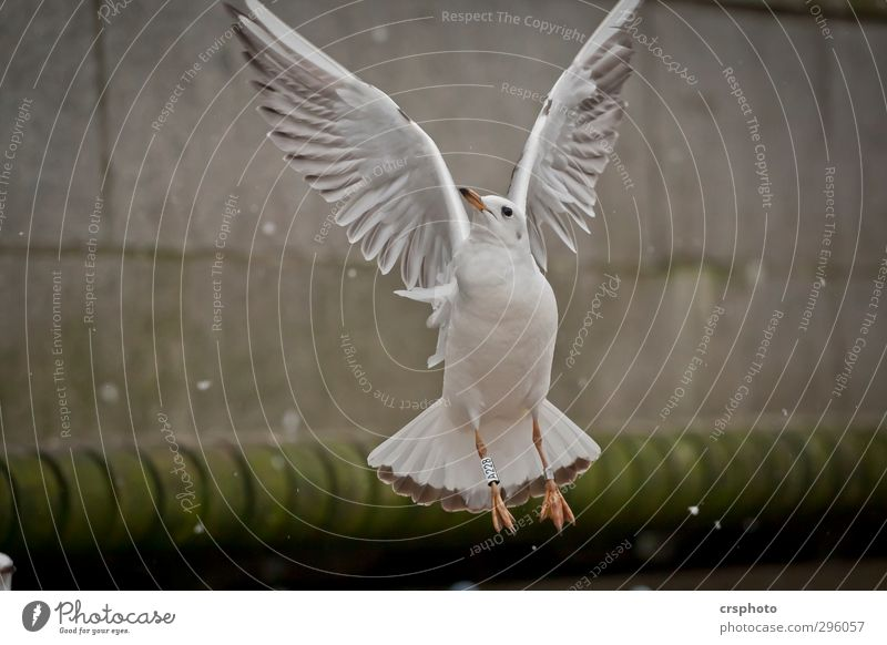 Fly me to the moon... Animal Bird 1 Flying Alster Hamburg seagulls Furniture flapping Go up Colour photo Exterior shot Day Animal portrait