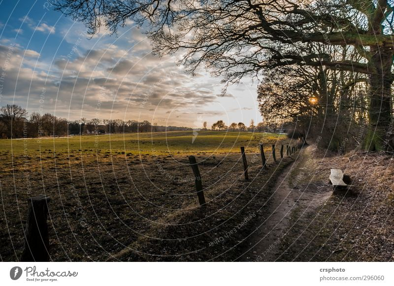 Keep looking for a peaceful place Nature Landscape Animal Sky Clouds Sun Sunlight Beautiful weather Tree Field Forest Pasture To enjoy Exceptional Infinity