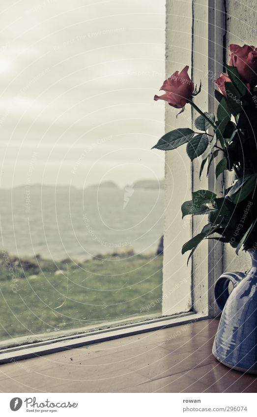 on the window sill Living or residing Flat (apartment) Environment Nature Landscape Plant Rose Blossom Waves Coast Bay Ocean Calm Lovesickness Wanderlust