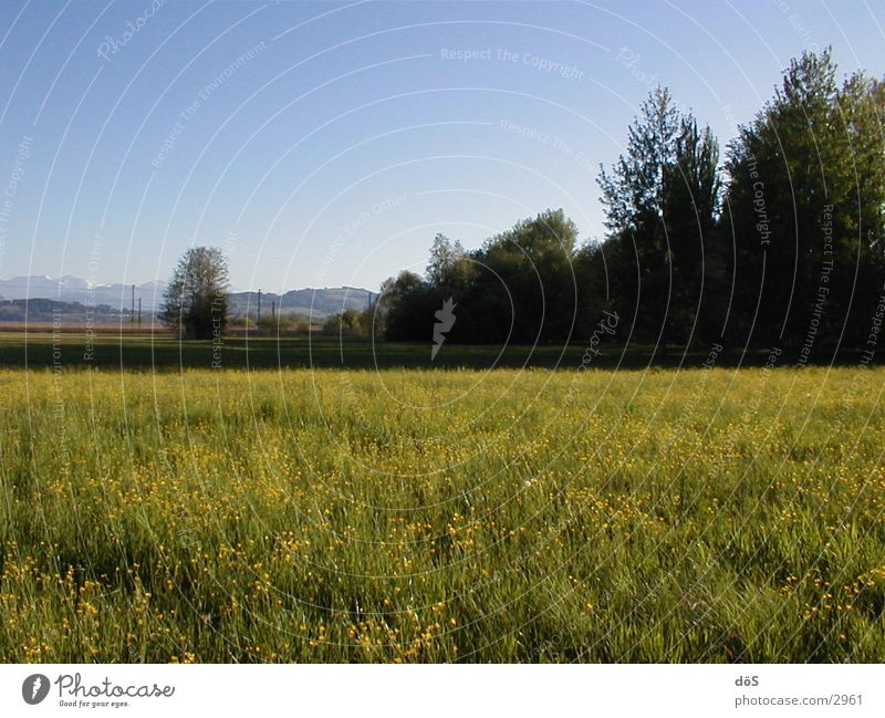 landscape Meadow Tree Flower Grass Vantage point Americas Landscape Mountain