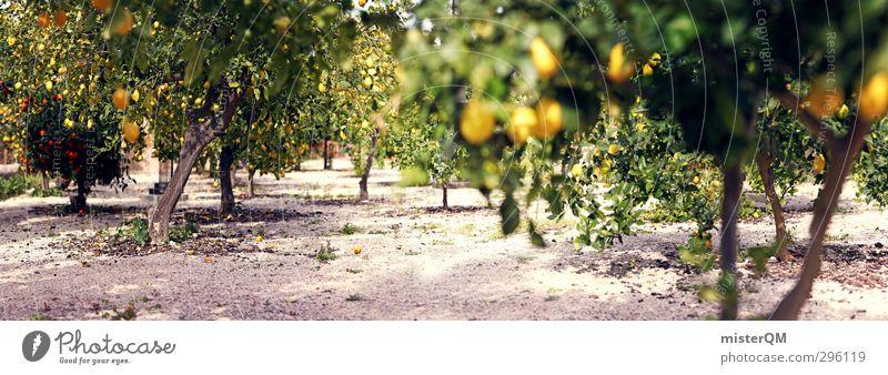 Lemon panorama. Environment Nature Landscape Plant Esthetic Contentment Lemon juice Lemon yellow Lemon tree Avenue Orange tree Plantation South Many Tree