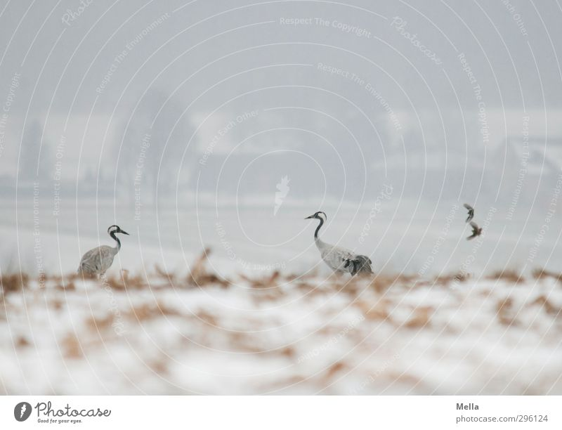 Nature Landscape Animal Winter Environment Cold Snow Freedom Natural Bird Together Weather Flying Field Pair of animals Earth
