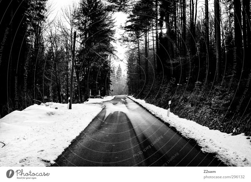 alone in the hall Hiking Winter Snow Forest Traffic infrastructure Street Lanes & trails Dark Creepy Cold Trashy Calm Homesickness Wanderlust Loneliness Horizon