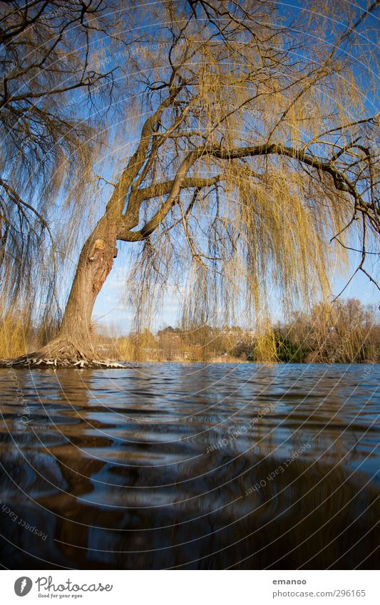 sad water pasture Environment Nature Landscape Plant Water Sky Climate Weather Tree Waves Coast Lake Hang To dry up Growth Wet Natural Blue Green Power