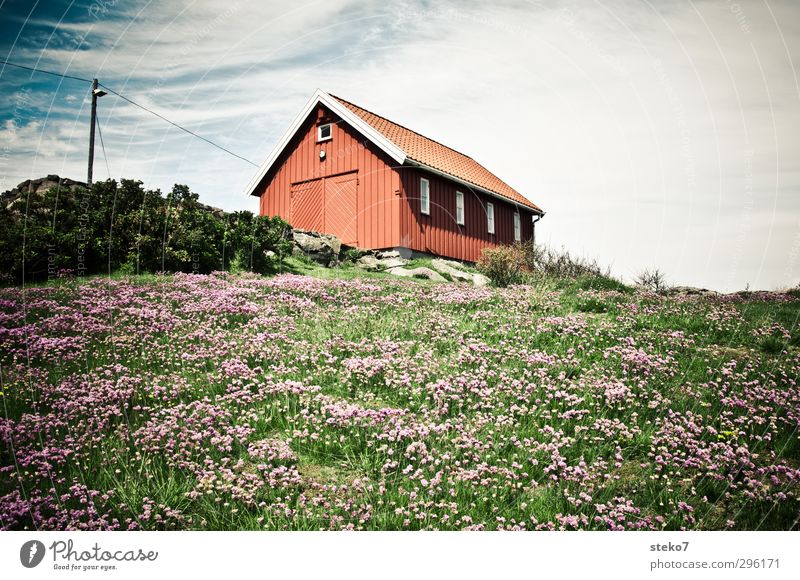 red shed Nature Summer Flower Meadow House (Residential Structure) Garden Natural Green Red Loneliness Norway Wooden hut Colour photo Exterior shot Deserted Day