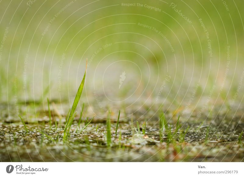 Come out, spring! Nature Plant Earth Spring Grass Blade of grass Garden Growth Fresh Small Green Delicate Colour photo Subdued colour Exterior shot Close-up