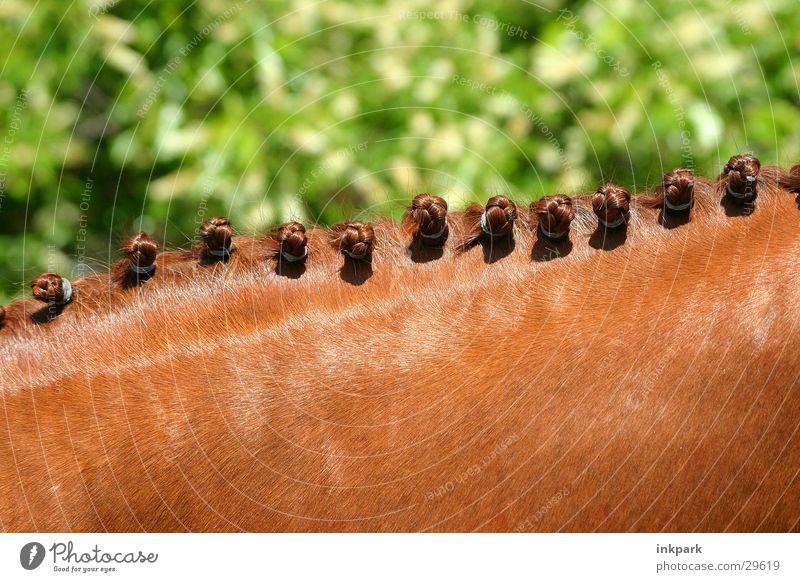floor dimension Horse Nape Braids Transport Neck