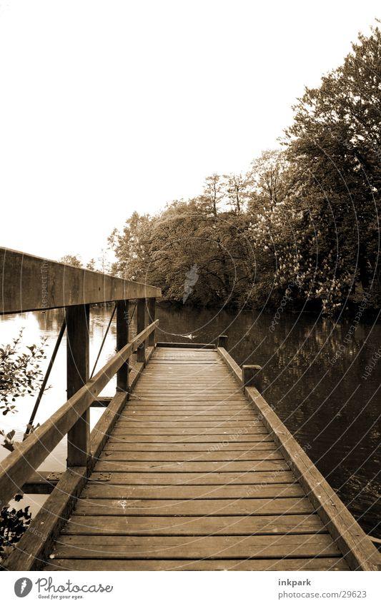 Far into the water Footbridge Wood Tree Pond Water Beautiful weather Gloomy