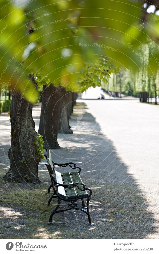 Soon it will be parking time again Summer Beautiful weather Plant Tree Leaf Foliage plant Park Town Friendliness Gray Green Joie de vivre (Vitality)