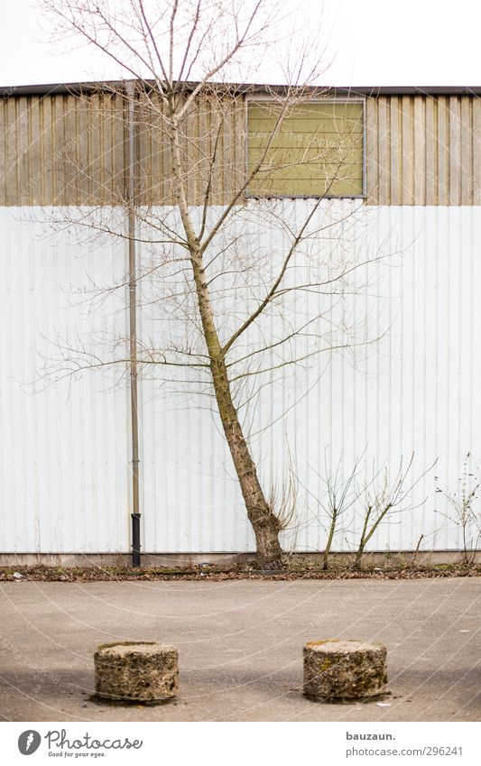 Nature White Plant Tree Environment Wall (building) Street Lanes & trails Wood Wall (barrier) Building Gray Stone Weather Facade Wind