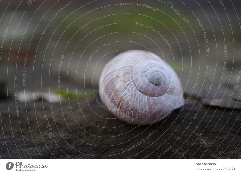 overslept.... Environment Nature Animal Snail 1 Snail shell Stone Esthetic Authentic Simple Beautiful Uniqueness Natural Round Slimy Brown Gray Colour photo